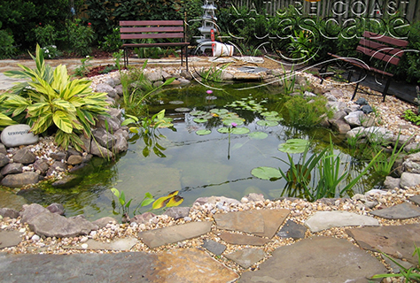 Central Florida Water Garden Installation Ponds Pondless